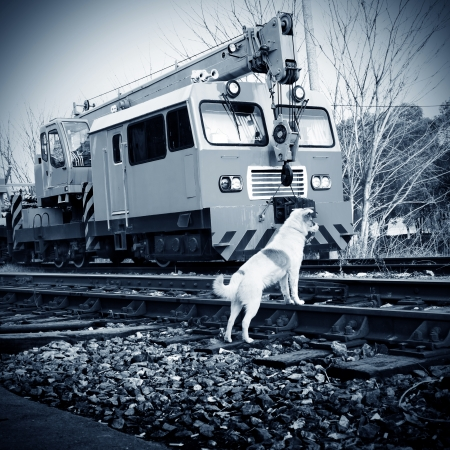 The vagrant dog along the railway line photo