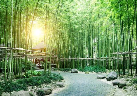 China's bamboe, groeit in het zuiden van China. Stockfoto