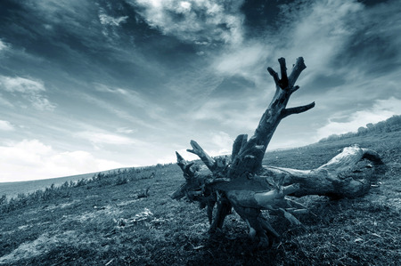 arboles secos: páramo desierto y los árboles muertos Foto de archivo