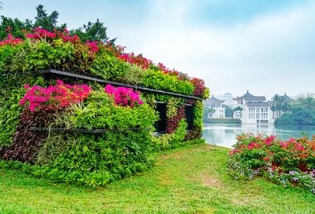 Beautiful spring, park lakeside plants, Haikou, China.