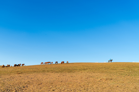 a herd of horses and herders on the autumn meadow