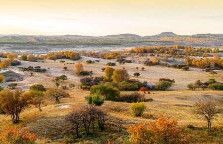 Grassland and birch forest, Inner Mongolia, China.