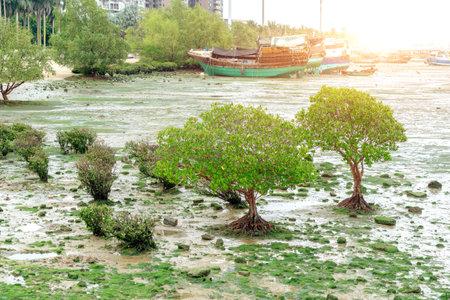 Plants and fishing boat on the beach, Zhanjiang, China.