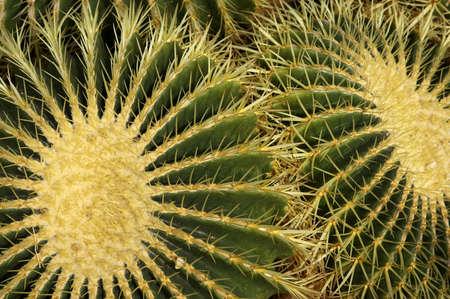 formidable: Cactus kew gardens Richmond London uk