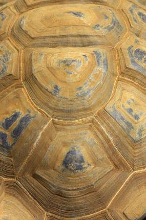 starr: Riesen-Schildkr�te Shell