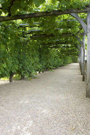 Pathway through grapevine covered pergola at chateau, de, villandry, loire, valley, france Stock Photo