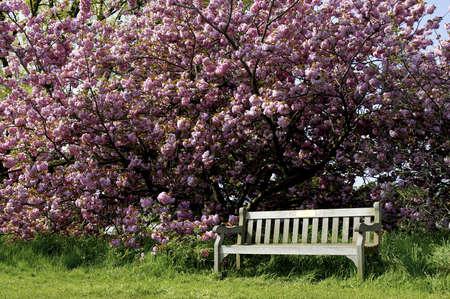 bench park: �nico banco vac�o del parque Foto de archivo
