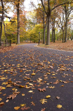 Pathways within the ramble, central park, Manhattan, New York, America, USA