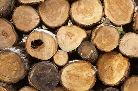 Pile of logs cut ready for use in a fire, some winter frost on the bark Stock Photo - 298504