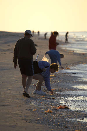 Early morning avid shell hunters looking for freshly washed up sea shells near bowmans beach famous for the abundance of shells on Sanibel Island Florida America united states taken in march 2006 photo