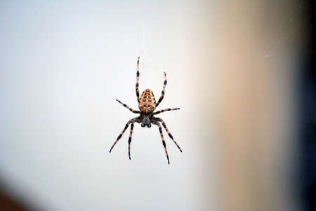 ugliness: Giant European house spider on the web