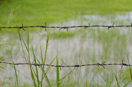 rus: Rus Barb wire fence with overgrown grass Stock Photo