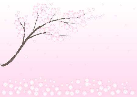 spring time: Vector Cherry blossom in spring time; background and illustration