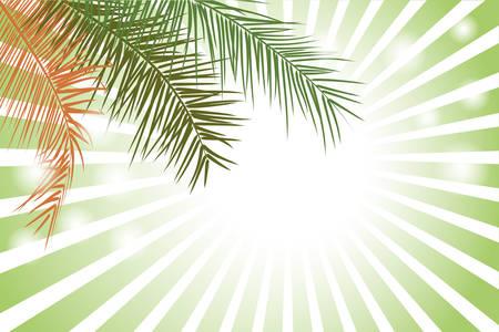 coconut leaf: Palm Leaf or Coconut leaf Background Illustration
