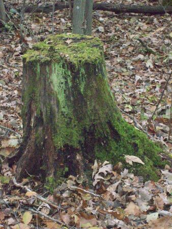 Mossy wood stump in forest Фото со стока