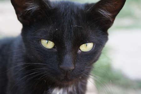 cat,enimal Stock Photo