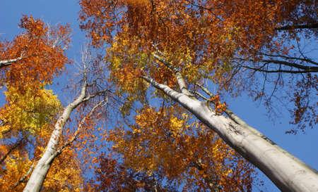 autumn,landsccape Stock Photo