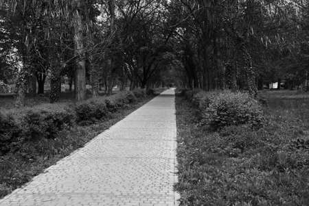 road to the park