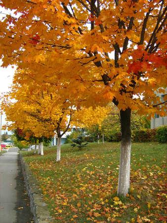 autumn landscape of the city