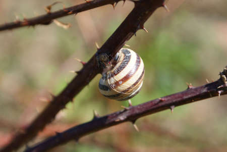 snail extremals