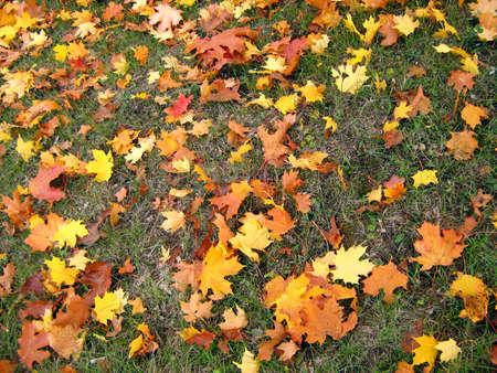 carpet of autumn leaves