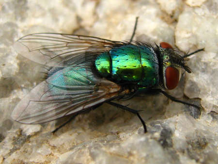 green fly sitting on a rock