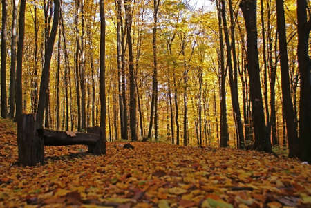 autumn landscape with wood bench Stock Photo