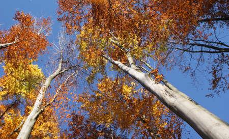 autumn trees against the blue sky Stock Photo
