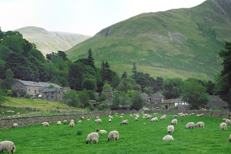 Flock of sheep in a field surrounded by a dry stone wall and village and hills in the background. photo