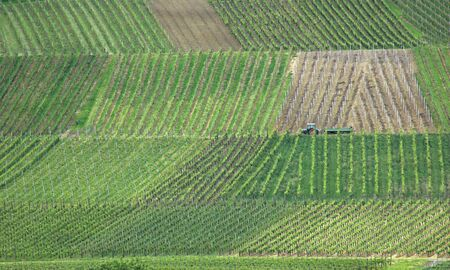Wonderful Wineyard landscape on Blankenhornsberg, Germany Stock Photo - 4224333