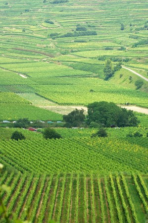 Beautiful vineyard landscape on Blankenhornsberg, Germany Stock Photo - 4224335