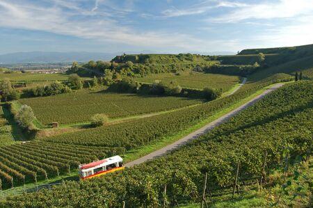 Beautiful vineyard landscape on Blankenhornsberg, Germany Stock Photo - 4445518
