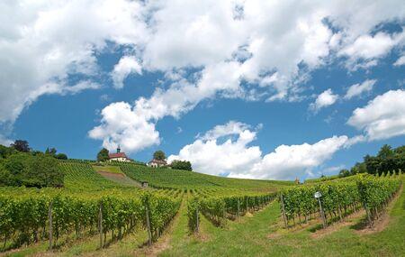 Vineyard field in Germany photo