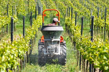 Framer is just spreading the dung with tractor in the vineyard Stock Photo - 7134562