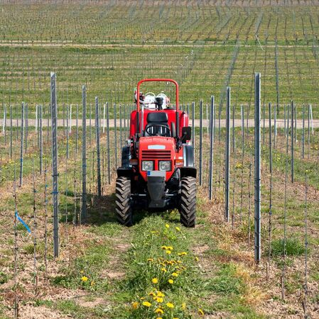 Tractor in the vineyard in spring time photo