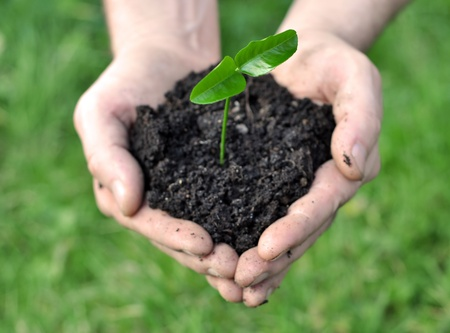 Young growing plant holding in hand over green background Stock Photo - 8979165