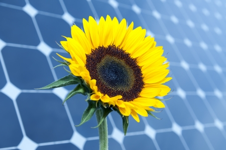 alternativ: Sunflower with solar panels in the background