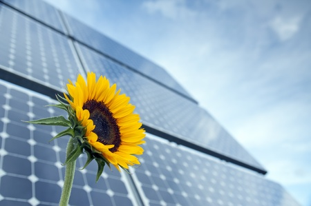 Sunflower with solar panels in the background against the blue sky Stock Photo
