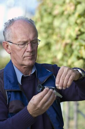 Experienced Vintner Measures The Sugar Content of Grapes With A Refractometer Reklamní fotografie