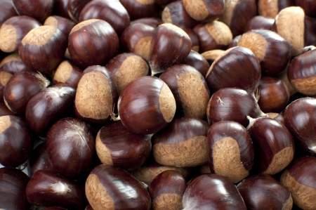 buckeye seed: Plenty of Hand-picked Ripe Chestnuts in autumn Stock Photo