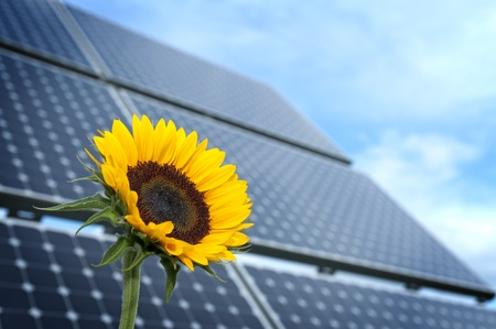 alternativ: Sunflower with solar panels in the background against the blue sky Stock Photo