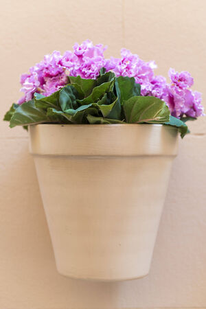 impatiens: flower pot with pink flowers hanging on a house wall