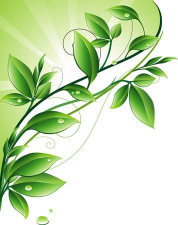 Ornamento verde  Vettoriali