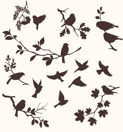 Pájaros y ramas Foto de archivo - 26766485