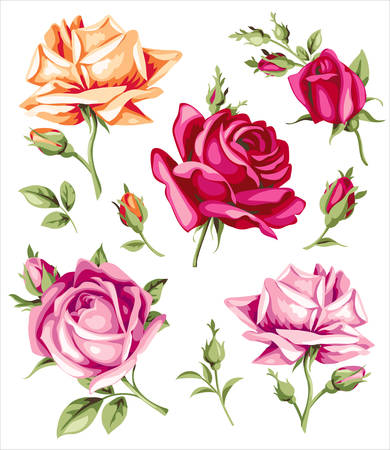 Decorative vintage roses. Vector set of flowers and buds
