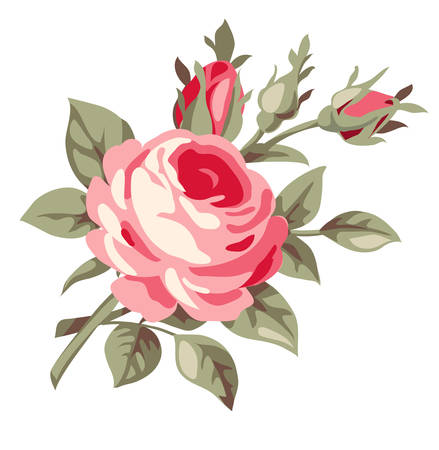 rose: Vintage decorative rose. Vector flowers