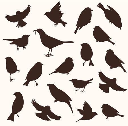 Ensemble vectoriel de silhouette d'oiseau. Oiseaux assis et volants Banque d'images - 76610245