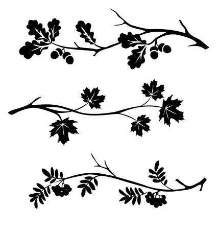 Autumn twigs of oak, rowan and maple silhouette. Vector illustration