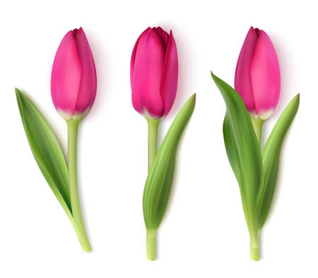 Three red tulip with realistic shadow on white. Vector illustration 向量圖像