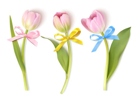 3 pink tulip isolated on white. Vector illustration
